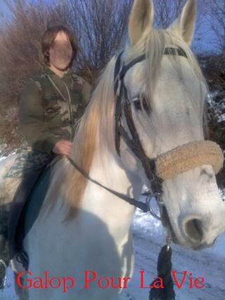 Ouschkan, Hongre 14 ans, placé hors association Ouschkan2