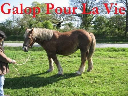 POLKA - cheval de Trait  née en 1984 - adoptée en janvier 2010 par asa  Polka1