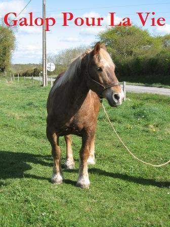 POLKA - cheval de Trait  née en 1984 - adoptée en janvier 2010 par asa  Polka2