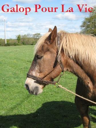 POLKA - cheval de Trait  née en 1984 - adoptée en janvier 2010 par asa  Polka3