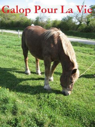 POLKA - cheval de Trait  née en 1984 - adoptée en janvier 2010 par asa  Polka4