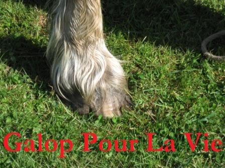 POLKA - cheval de Trait  née en 1984 - adoptée en janvier 2010 par asa  Polka5