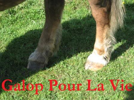 POLKA - cheval de Trait  née en 1984 - adoptée en janvier 2010 par asa  Polka6