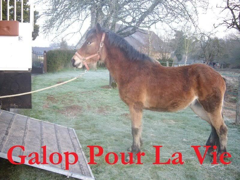 SAFRAN  - ONC Poney né en 2006 - adopté en octobre 2009 par Jean-Claude - Page 7 Safrinou2