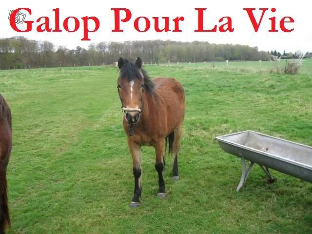 SAFRAN  - ONC Poney né en 2006 - adopté en octobre 2009 par Jean-Claude - Page 7 Safrinou3