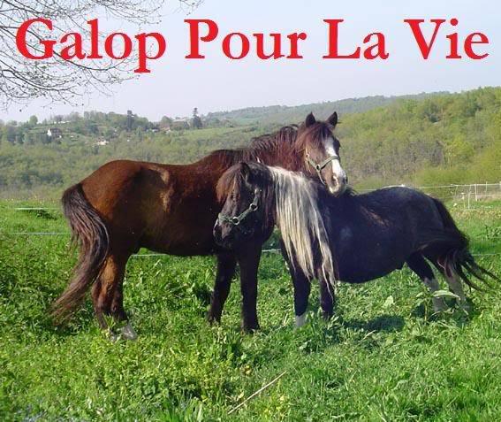 ARTHUR & AKIM - ONC poneys présumés nés en 1989 - adoptés en août 2009 par kalkita  AkimArthur10