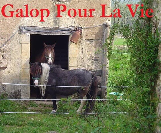 ARTHUR & AKIM - ONC poneys présumés nés en 1989 - adoptés en août 2009 par kalkita  AkimArthur11
