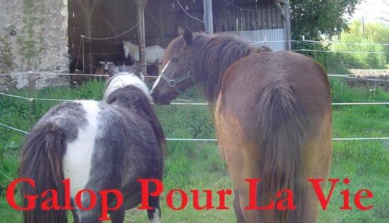 ARTHUR & AKIM - ONC poneys présumés nés en 1989 - adoptés en août 2009 par kalkita  AkimArthur13
