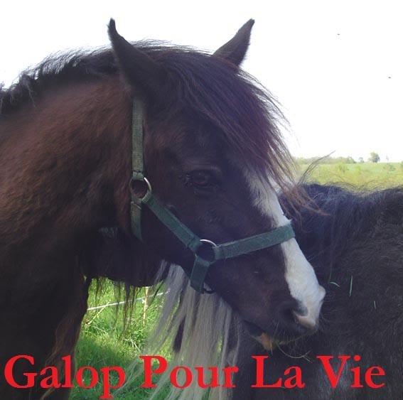 ARTHUR & AKIM - ONC poneys présumés nés en 1989 - adoptés en août 2009 par kalkita  AkimArthur14
