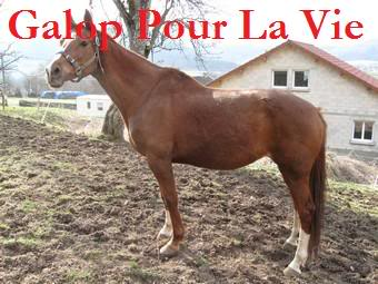 (25) BABYLONE DE MADINE jument SF 20 ans pour compagnie Babylo10