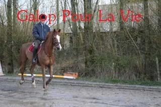 Cadou Dal hongre 19ans - placé hors association Cadou