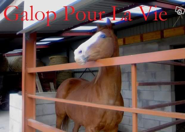 CALIN D' AMOUR - Pur Sang né en 1994 - placé hors association Calin_10