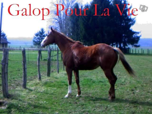 CALIN D' AMOUR - Pur Sang né en 1994 - placé hors association Calin_11