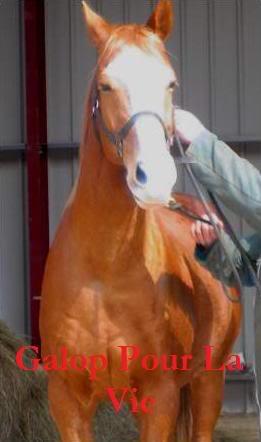 CALIN D' AMOUR - Pur Sang né en 1994 - placé hors association Calin_12