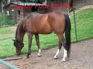 CHAMIL - ONC typé PSAR né en 1990 - adopté en juillet 2009 par minet Chamil16