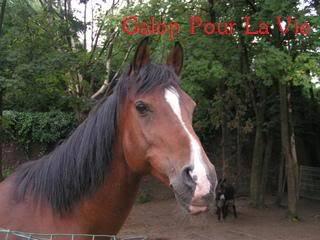 CHAMIL - ONC typé PSAR né en 1990 - adopté en juillet 2009 par minet Chamil9