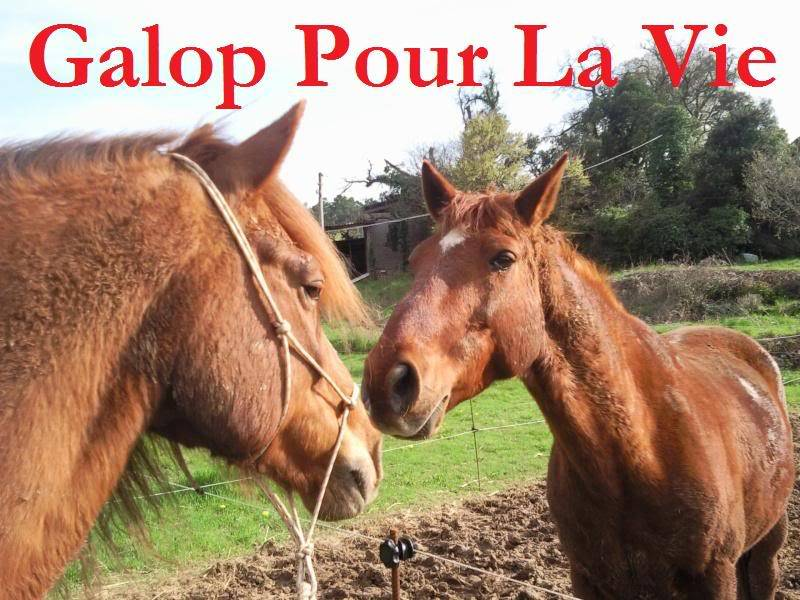 CUPIDON - ONC selle né en 1999 - adopté en juin 2011- hébergé à la Grange des Selles suite à abandon - Page 6 Cupidon1