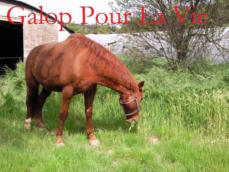 CUPIDON - ONC selle né en 1999 - adopté en juin 2011- hébergé à la Grange des Selles suite à abandon - Page 6 Cupidooon