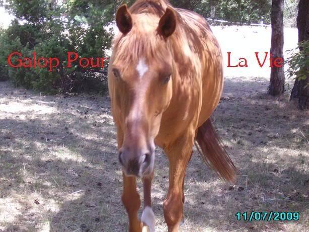 CUPIDON - ONC selle né en 1999 - adopté en juin 2011- hébergé à la Grange des Selles suite à abandon - Page 8 Cupii2