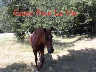 CUPIDON - ONC selle né en 1999 - adopté en juin 2011- hébergé à la Grange des Selles suite à abandon - Page 9 Cupii4
