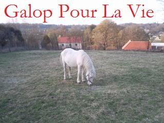 Dalhi ponette Welsh - gardée par sa propriétaire Dalhi10