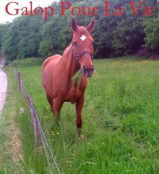 ETOILE - ONC Selle née en 1992 -  - placée puis devenue protégée GPLV - Page 5 Etoile20