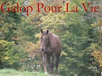 FLEUR DES CHAMPS - SF née en 1993 - adoptée en 2009 par Françoise Fleur_11