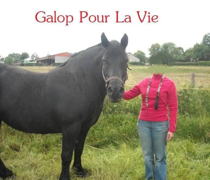 HANDY - Trait typée Breton née en 1995  (et sa fille TOSCANE née en 2010) - adoptée en juillet 2009 par Fannie Handy4