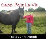 HANDY - Trait typée Breton née en 1995  (et sa fille TOSCANE née en 2010) - adoptée en juillet 2009 par Fannie Handy4bis