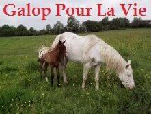NAOMIE - ONC selle typée Appaloosa née en 2001 - adoptée en mai 2009 par ponchet  Naomie13