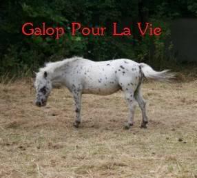 NEVADA poney hongre appaloosa - placé hors association Nvada3