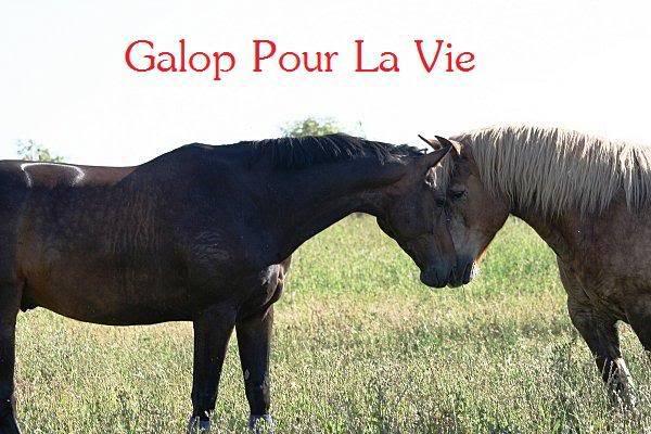 POLKA - cheval de Trait  née en 1984 - adoptée en janvier 2010 par asa  - Page 3 Polka18