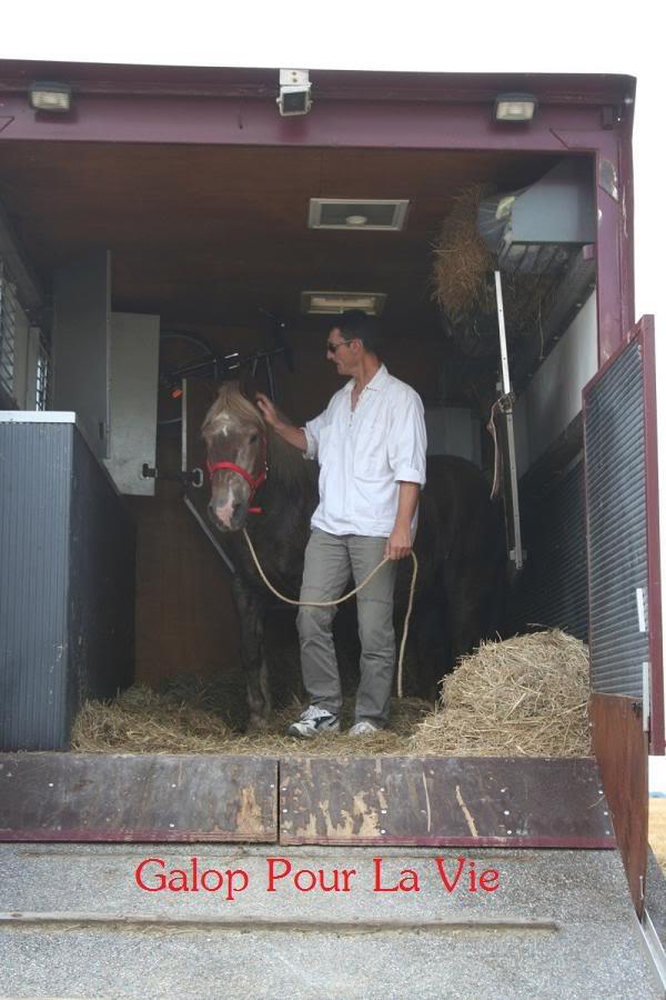 POLKA - cheval de Trait  née en 1984 - adoptée en janvier 2010 par asa  - Page 3 Polka_10