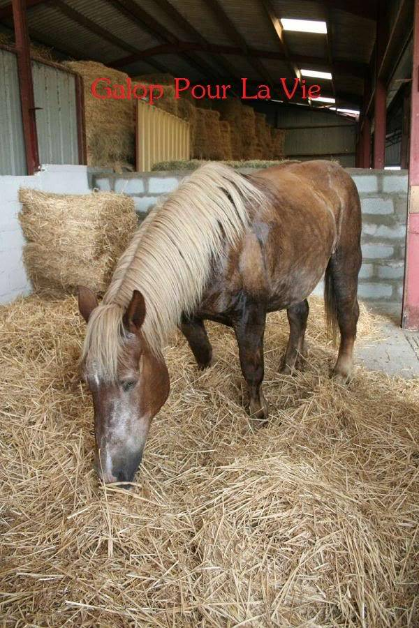 POLKA - cheval de Trait  née en 1984 - adoptée en janvier 2010 par asa  - Page 3 Polka_11