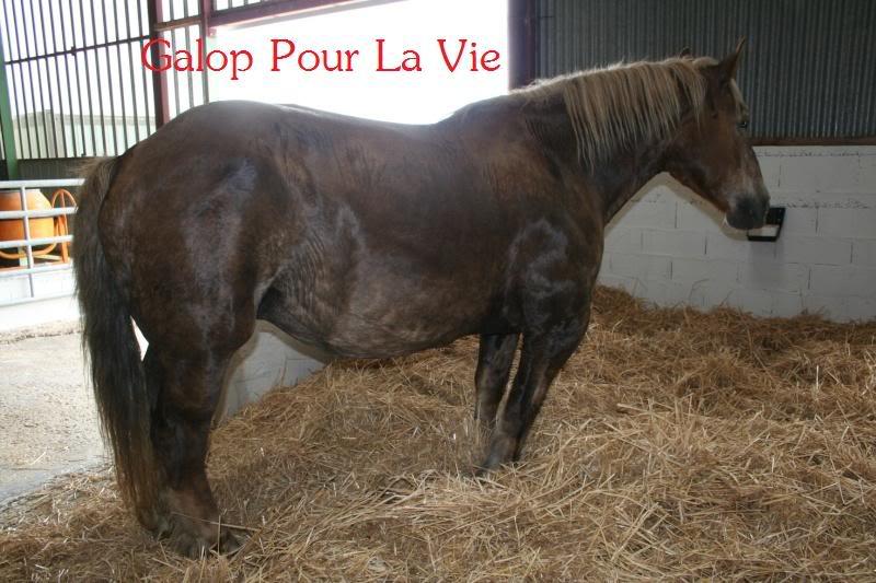 POLKA - cheval de Trait  née en 1984 - adoptée en janvier 2010 par asa  - Page 3 Polka_13