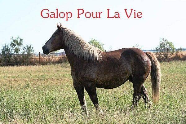 POLKA - cheval de Trait  née en 1984 - adoptée en janvier 2010 par asa  - Page 3 Polka_14