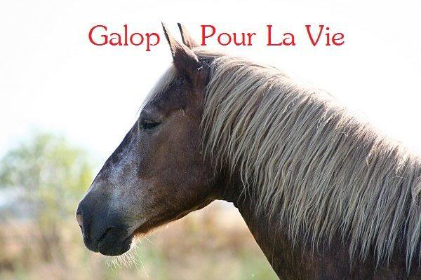 POLKA - cheval de Trait  née en 1984 - adoptée en janvier 2010 par asa  - Page 3 Polka_15