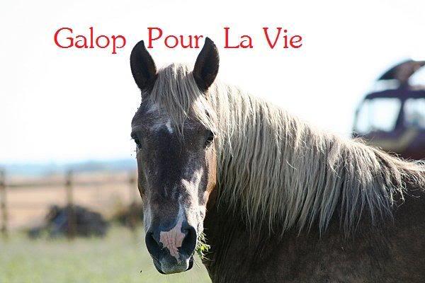 POLKA - cheval de Trait  née en 1984 - adoptée en janvier 2010 par asa  - Page 3 Polka_16