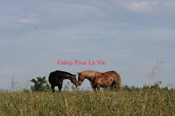 POLKA - cheval de Trait  née en 1984 - adoptée en janvier 2010 par asa  - Page 3 Polka_17