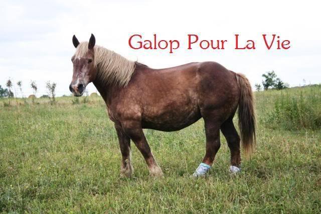 POLKA - cheval de Trait  née en 1984 - adoptée en janvier 2010 par asa  - Page 4 Polka_3210