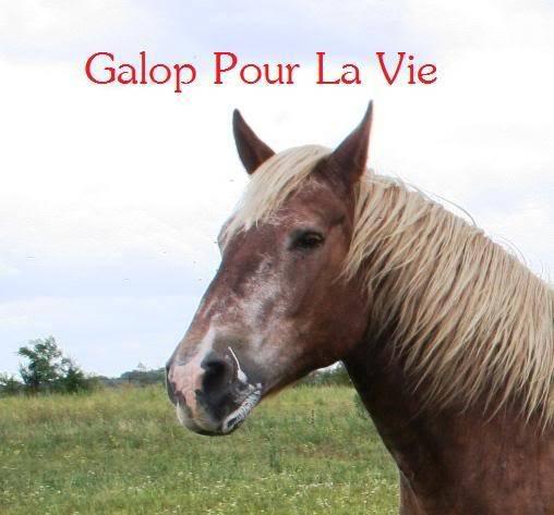 POLKA - cheval de Trait  née en 1984 - adoptée en janvier 2010 par asa  - Page 4 Polka_3211