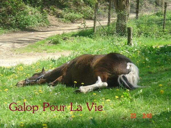 POUPOUNE - ONC Poney présumée née en  1984 - adoptée en août 2009 par Sylvie Poupoune1