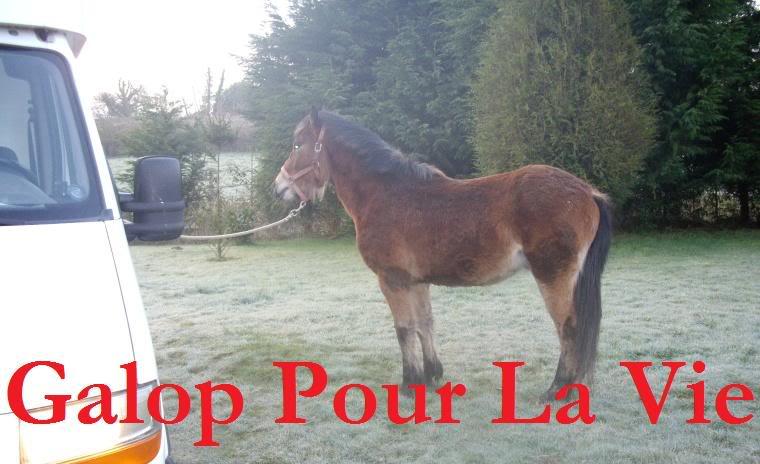SAFRAN  - ONC Poney né en 2006 - adopté en octobre 2009 par Jean-Claude - Page 7 Safrinou1