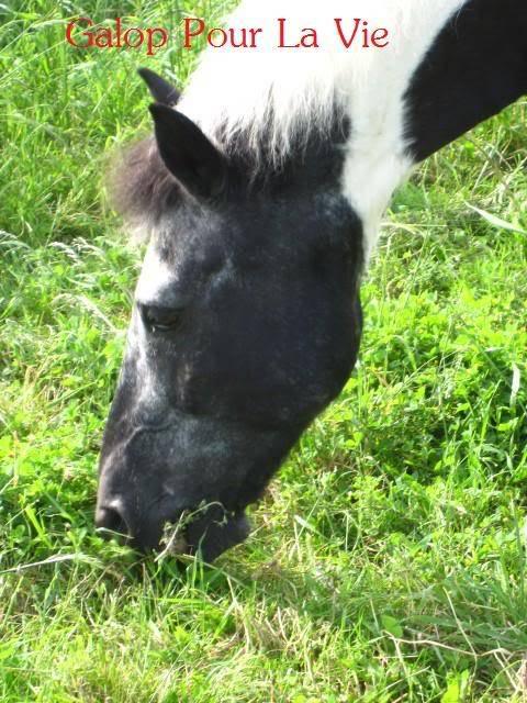 TITI poney hongre 1m25 - placé hors association Titi_210