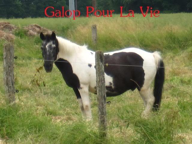 TITI poney hongre 1m25 - placé hors association Titi_310