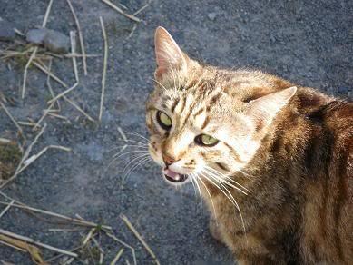 Deux chatons tigrés à donner - placés IMGP3442