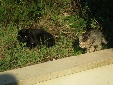 Deux chatons tigrés à donner - placés IMGP5189