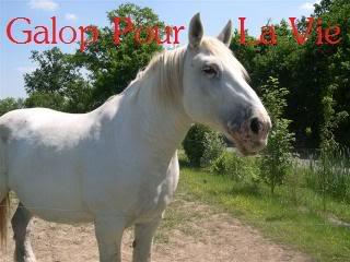 AMANDA - Percheron née en 1988 Amanda11