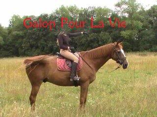 Cadou Dal hongre 19ans - placé hors association Baladebiscadou