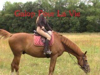 Cadou Dal hongre 19ans - placé hors association Baladecadou